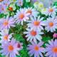 花壇のお花が綺麗に…